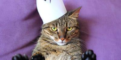 gatto-tigrato-con-corona-di-carta