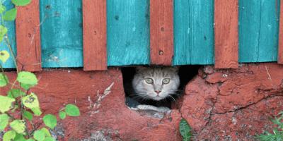 ¿Por qué mi gato desaparece durante días?