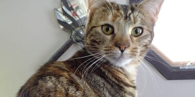 5 things that prove your cat really is the one in charge