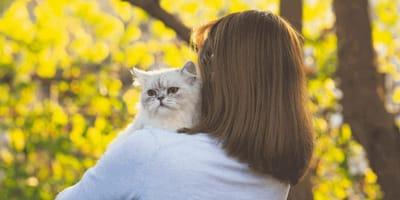 Weil sie eine Katze hat: Familie muss 20 Tage ins Gefängnis!