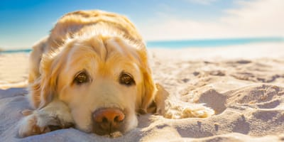Cane scottato dal sole: rimedi e consigli contro le ustioni