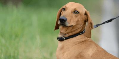 Nieuwe wet: mogen honden niet meer worden aangelijnd in 2023?