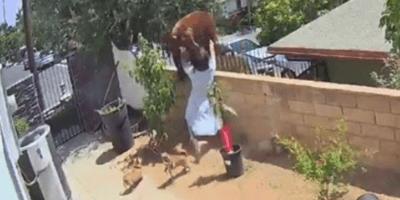 mujer enfrentandose a un oso para defender a sus perros