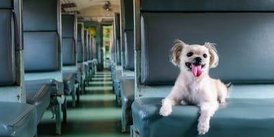 Quali sono le regole per viaggiare con il cane? UE e non