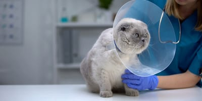 Quando sterilizzare un gatto? Tutte le curiosità