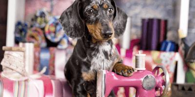 Perrotón 2021: Miles de perros desfilarán en Madrid contra el abandono