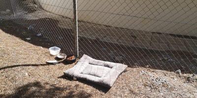 """Una cama de perro vacía en Granada y un grito desesperado: """"así no se hacen las cosas"""""""