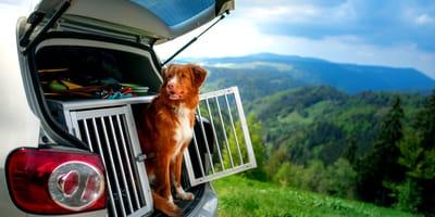 Vacaciones con perro: trucos para organizarlas sin sorpresas negativas