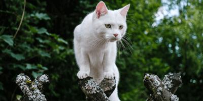 Kat in eigen tuin houden: hoe doe je dat?