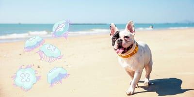 Picadura de medusa en perros: cosas que hay que hacer antes de actuar