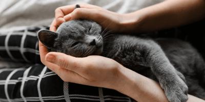Waarom komt een kat bij je liggen?