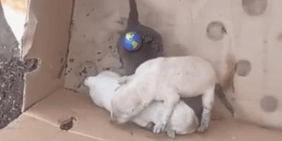 Toluca: Busca desesperada comida para sus cachorros y lo que encuentra es una muerte cruel
