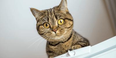 Cat makes shocking find behind fridge: Owner calls for help immediately