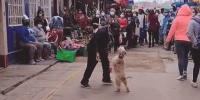 perro bailando calle