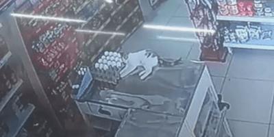 gato mostrador supermercado