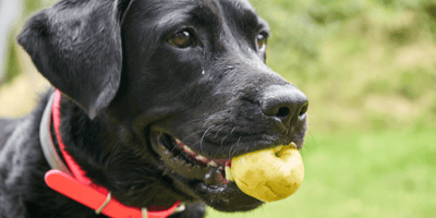 appel in hand, mag een hond appel?