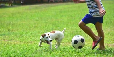 Le 7 migliori razze di cani che giocano a calcio! (Video)