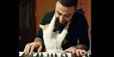 Kot obdarza miłością swojego grającego na pianinie tatę, a my nie możemy oderwać od  niego wzroku (VIDEO)
