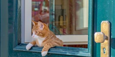 8 foto che dimostrano perché i gatti sono curiosi