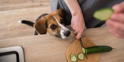 I cani possono mangiare i cetrioli? Ecco la verità