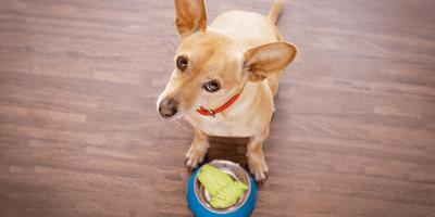 ¿Los perros pueden comer chayote o les hace mal?