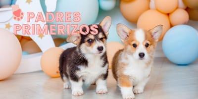 Padres primerizos: nombres para cachorros, ¡ideas para que te haga caso desde el primer momento!