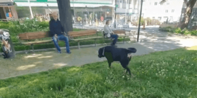 Man sits alone on park bench: Rottweiler goes to him and owner is left speechless