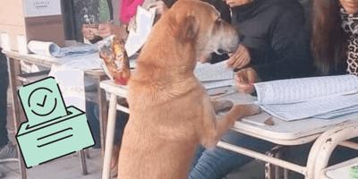 perro casilla voto