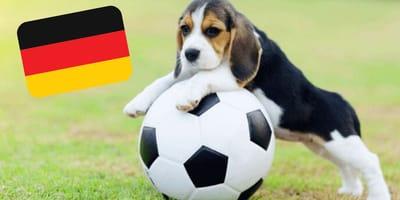 Fußball-EM 2021: Entdecke alle Hunde unserer Spieler!