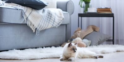 How to cat proof your house: A room-by-room guide