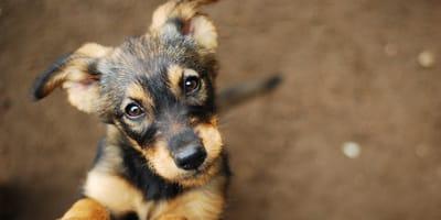 Perro feliz de ser adoptado