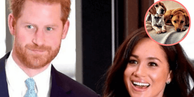 Harry and Meghan's dogs excited to meet the family's newest arrival
