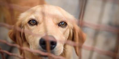 cane-beigne-dietro-una rete