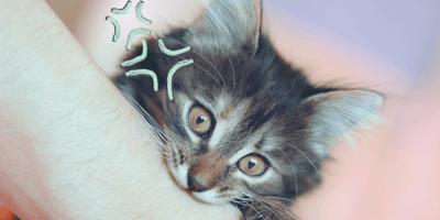 ¿Una mordida de gato es peligrosa?