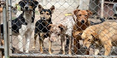La misteriosa muerte de casi 6000 perros en Chile