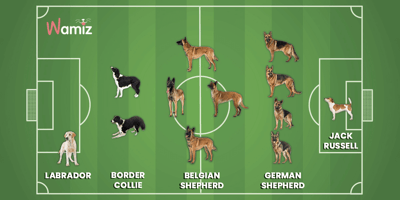 Euro 2020: Wamiz builds a football team made up of dogs