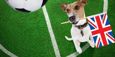 Jack Russell terrier football and UK flag in mouth