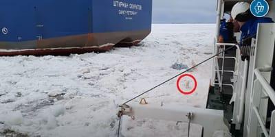 Marineros rusos ven algo raro en mitad del hielo Ártico: deciden subirlo a bordo (Vídeo)