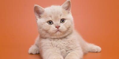 Nombres originales para gatos machos