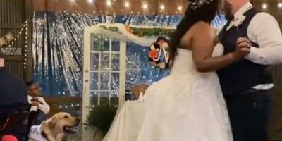 recien casados bailando y perro mirando