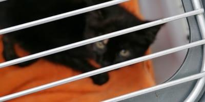 Kätzchen in Transportbox