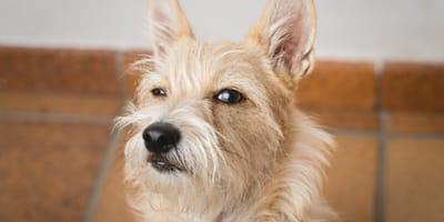 perro gesto desconfianza humano