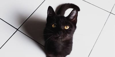 Why do cats love squares?