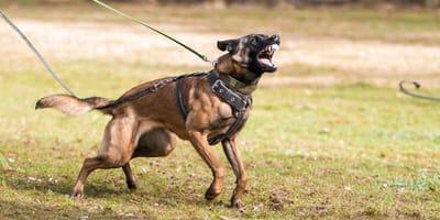 Co robić, gdy ugryzie nas pies? Postępowanie i możliwe powikłania