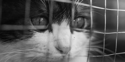 Gran estafa de adopción de gatos en Bogotá