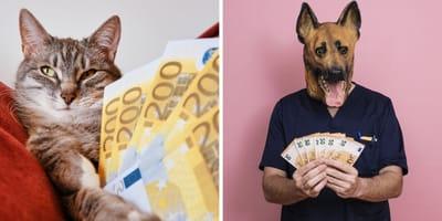 gato con billetes humano perro con billetes