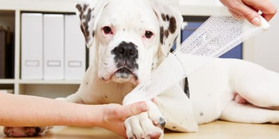 Articolazioni e condroprotettori per cani: alleati vincenti!