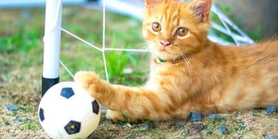 10 nomi per gatti italiani ispirati ai grandi calciatori