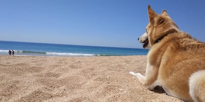 Vacaciones en Cádiz con perro: todo lo que hay que saber