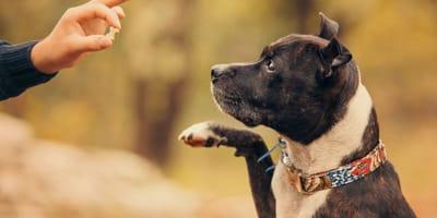 How should I use treats to train my dog?